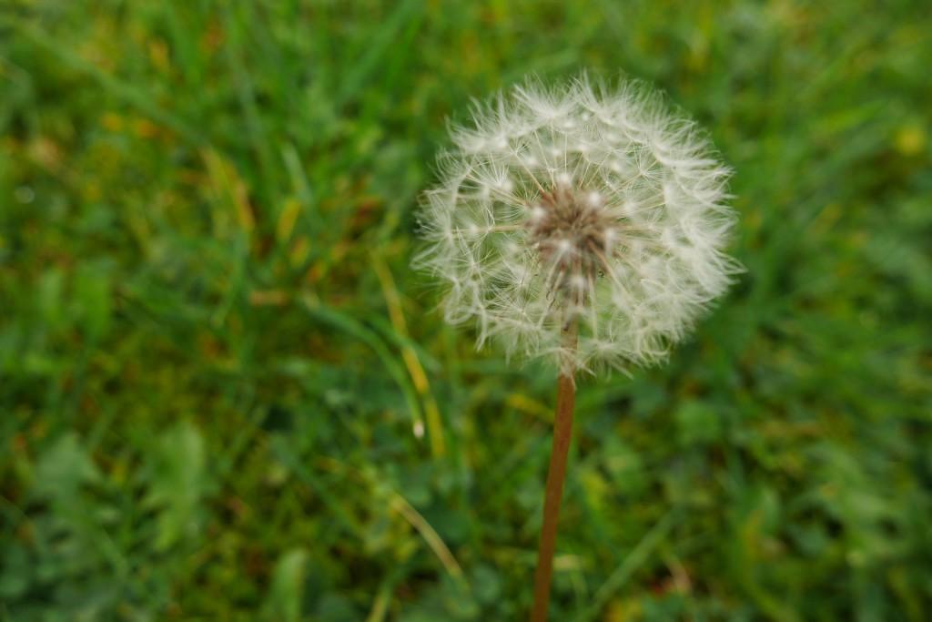 Alergia ocular primaveral